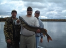 Turtle Chalet-Beautiful 45 inch fall muskie release